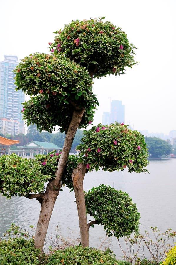 Liwan lake park scenery stock images