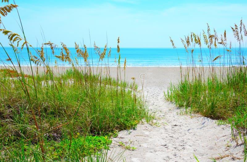 Lixe o trajeto através da aveia do mar para acalmar a praia azul do oceano imagem de stock