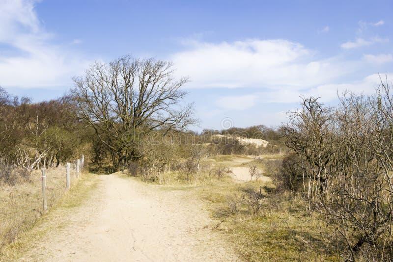 Lixe a paisagem, parque nacional Zuid Kennemerland, os Países Baixos fotos de stock