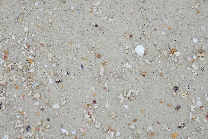 Lixe a praia e tenha a carcaça do marisco esta imagem para a textura, vagabundos imagens de stock royalty free