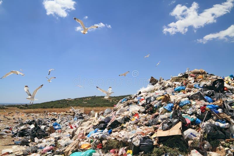 Lixo e gaivotas fotografia de stock royalty free