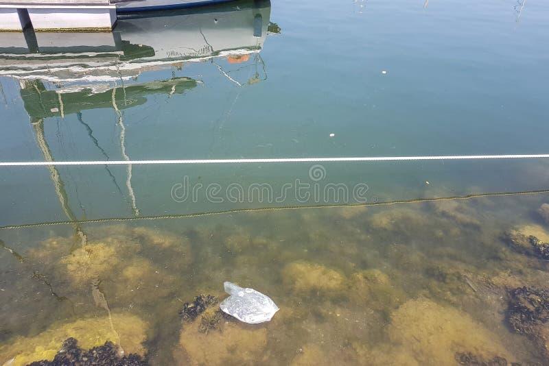 Lixo e saco de plástico na água do mar litoral fotografia de stock royalty free