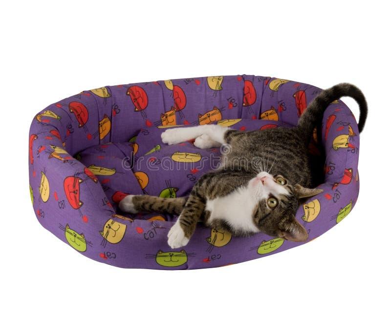 liying的猫下来 库存图片