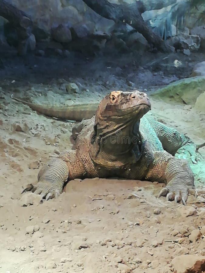 Lizard1 stock afbeelding
