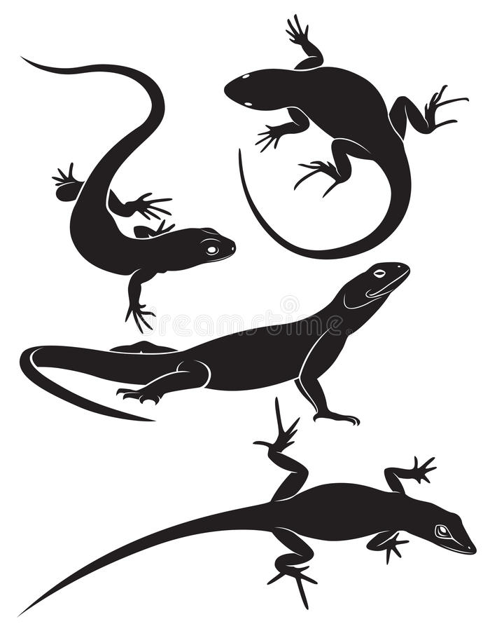 Lizard. The figure shows a lizard vector illustration