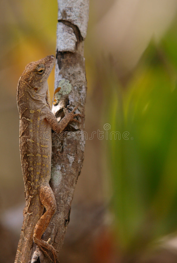 Lizard stock image