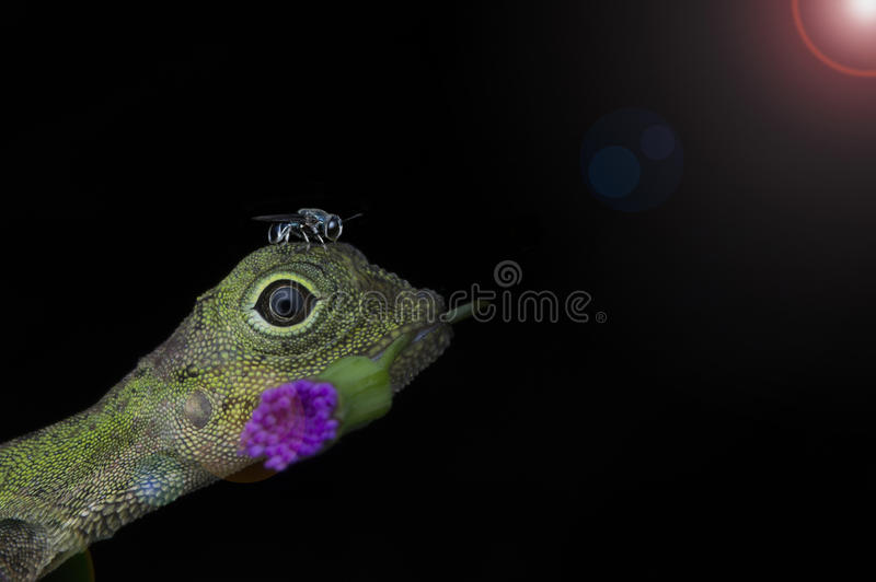 Lizard and bee royalty free stock image