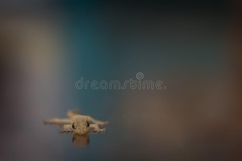 Lizard on a blur background. Closeup of lizard on a blur background stock photography
