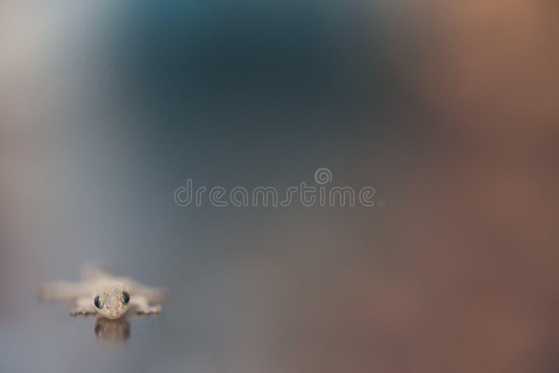 Lizard on a blur background. Closeup of lizard on a blur background stock photo