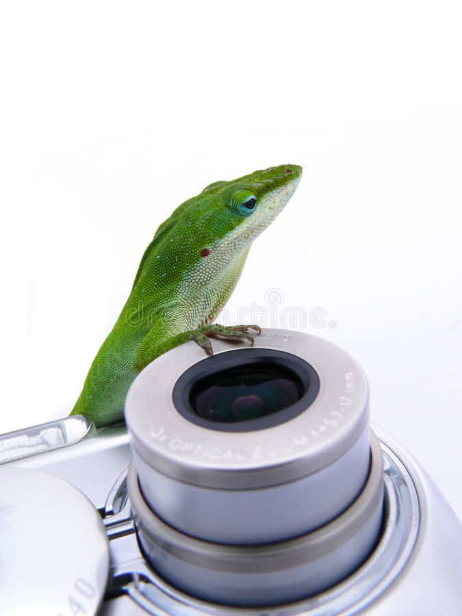 Download Lizard on camera stock photo. Image of life, photography - 4133956