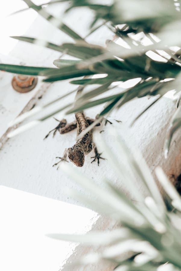 Lizard escondida debaixo das plantas imagens de stock