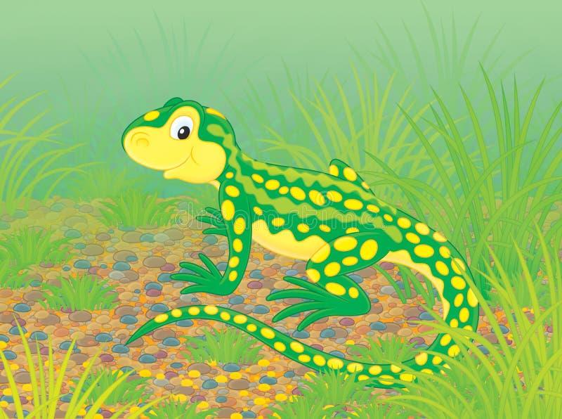 Download Lizard Stock Image - Image: 34299551