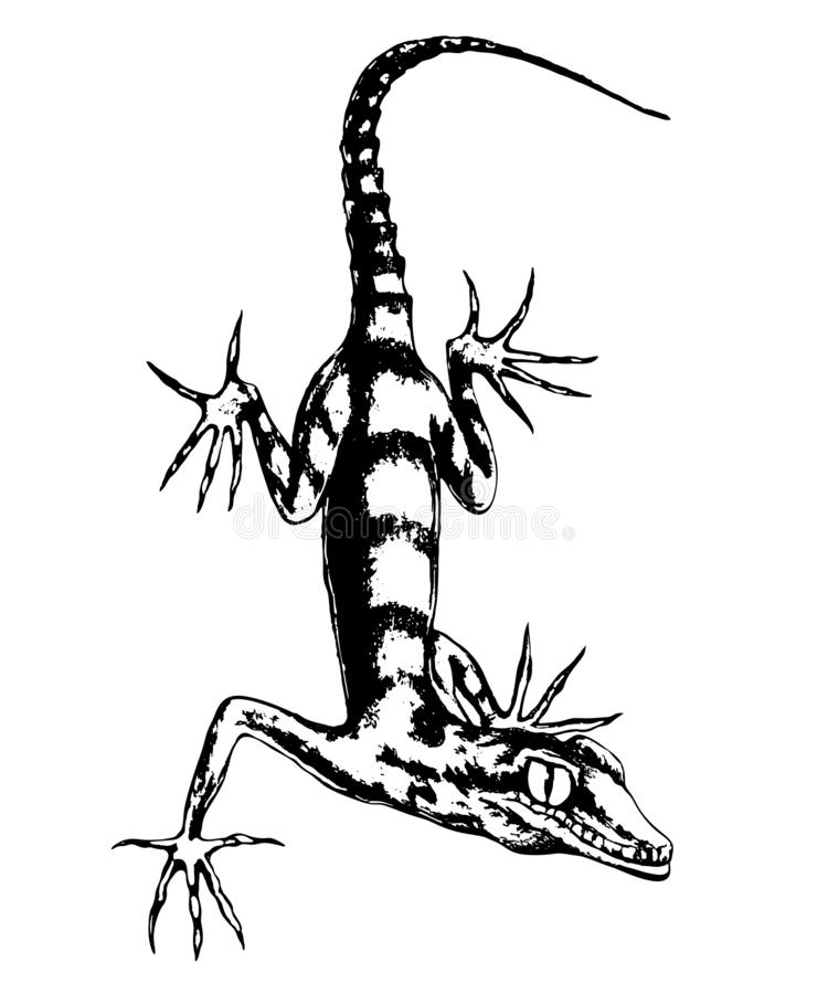 Lizard hand-drawn vector. Illustration in sketch style.Realistic drawing in graphite pencil on a white background vector illustration