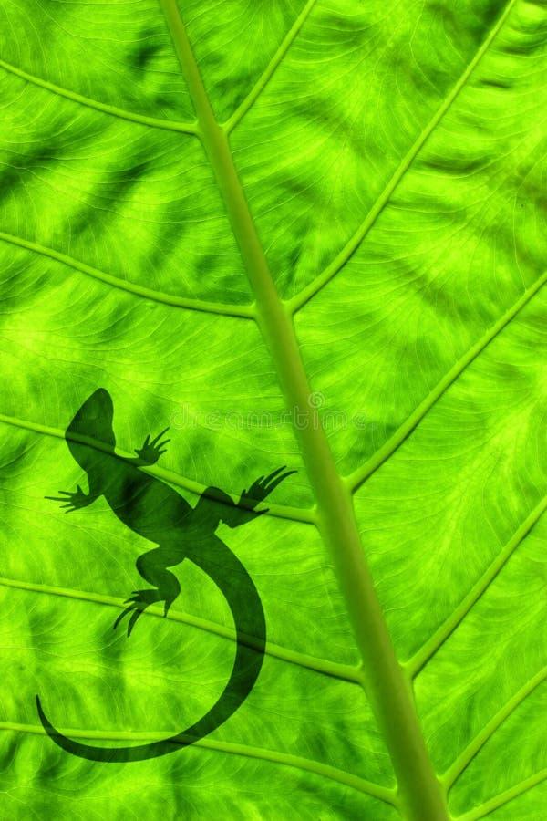 Lizard on Leaf. Giant tropical leaf with small lizard shadow royalty free stock photos