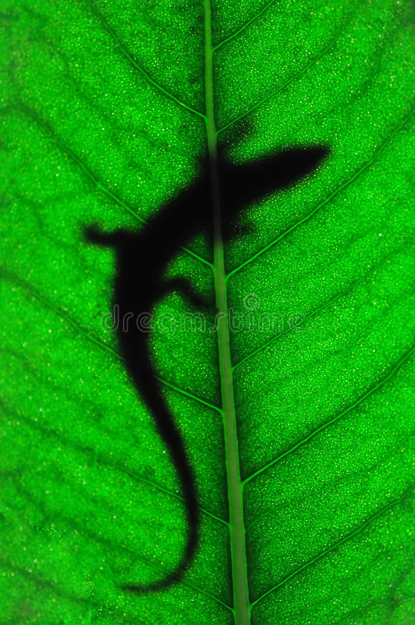 Download Lizard on leaf stock image. Image of glowing, forest - 23320523