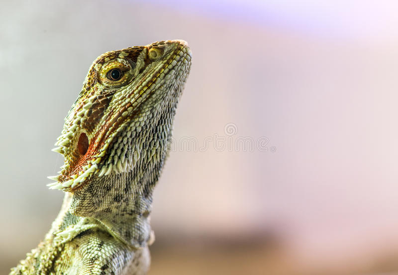 Lizard. Between leaves and stones royalty free stock images