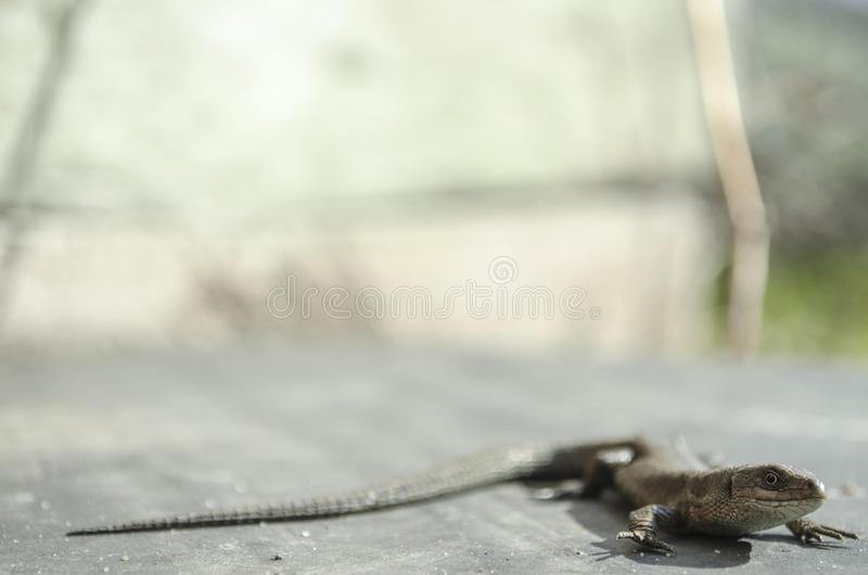 Lizard looking nature stock image