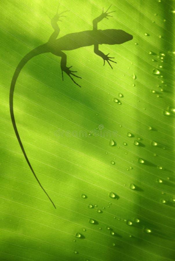 Free Lizard On Leaf Stock Photo - 1509720
