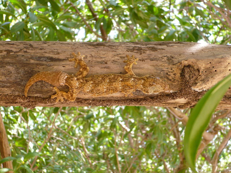 Lizard Reptile tree nature animal stock image