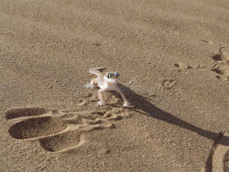 Download Lizard on a sand stock image. Image of photography, wildlife - 15557037