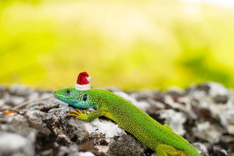 Download The Lizard In The Santa's Cap Stock Image - Image: 22291823