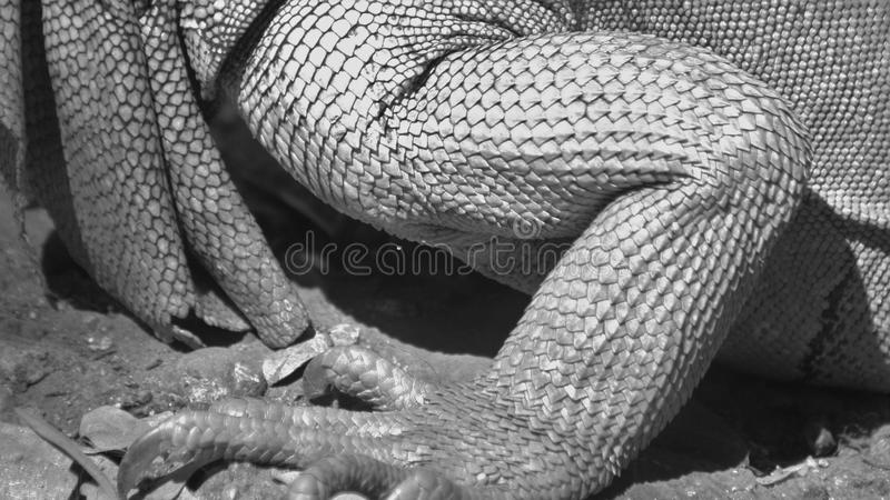 Lizard Scales stock photography