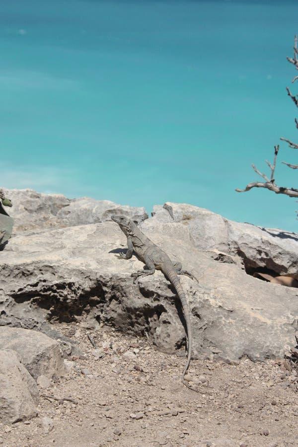 Download Lizard on the seashore stock photo. Image of ruins, ocean - 11140430