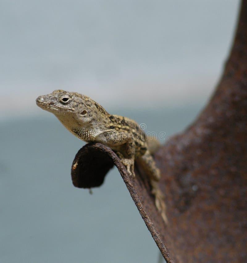 Lizard on shovel stock images