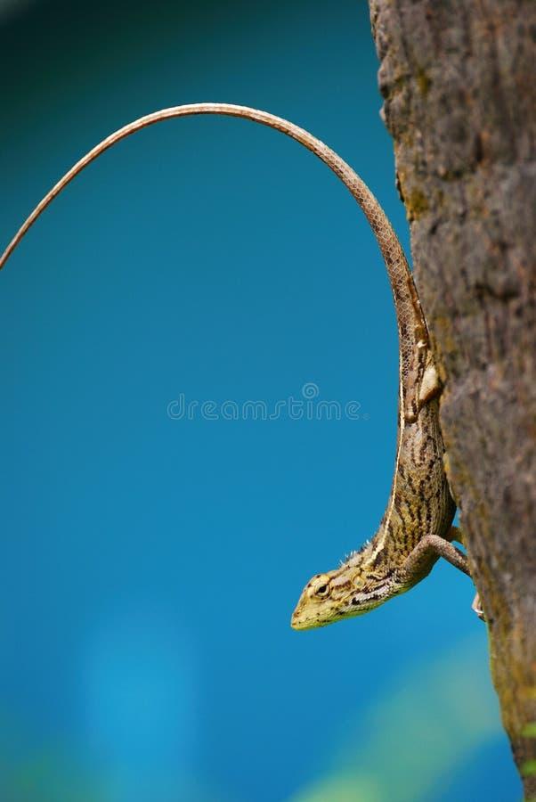Lizard on a tree stock image