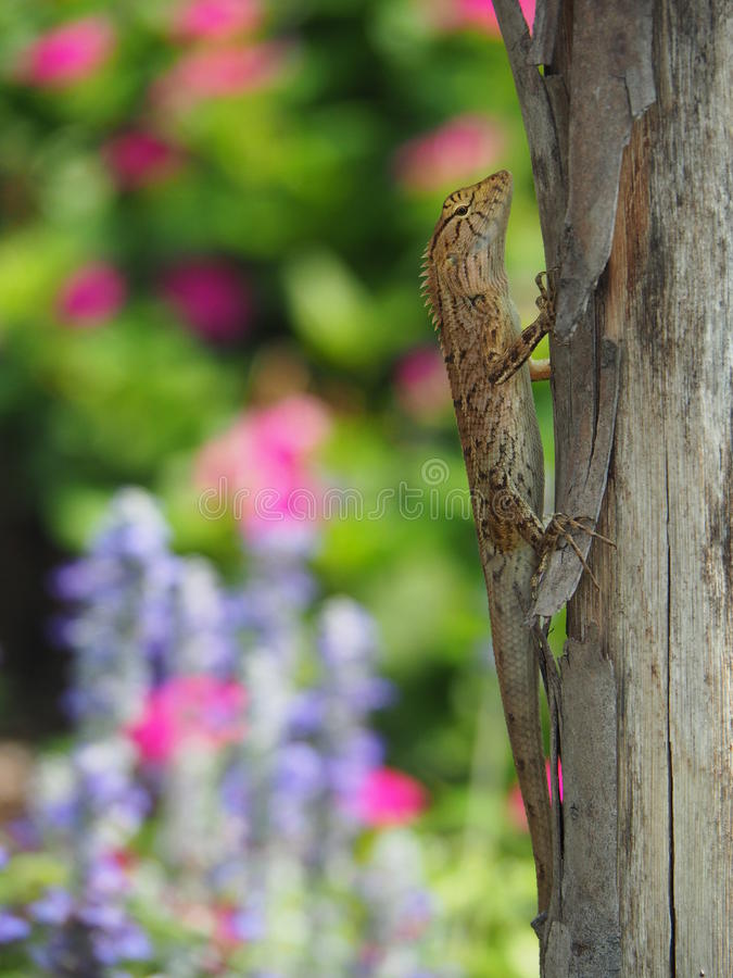 Lizard On Tree Trunk With Colorful Flowers Garden Background stock photo