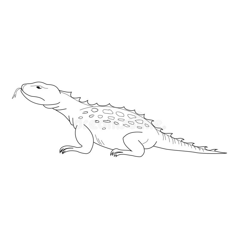Lizard vector. Hand drawn picture of lizard. Black thin line illustration, isolated on white. Background royalty free illustration