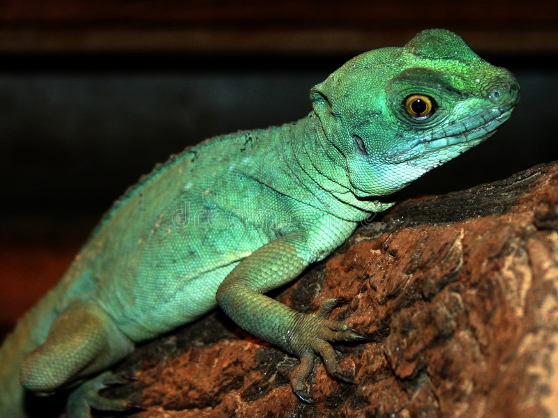 Download Lizard In The ZOO Royalty Free Stock Photo - Image: 21455