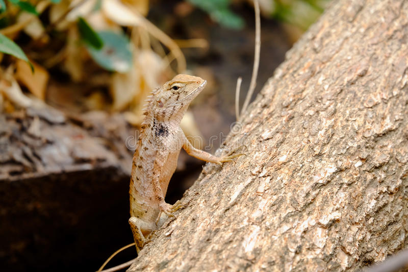 Lizards are looking for victims. Who want to capture royalty free stock image