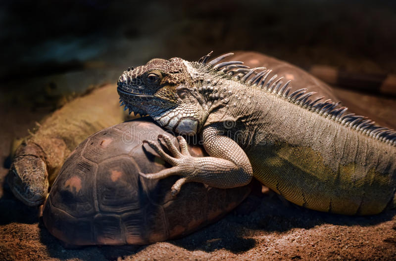 Lizards and turtles in the zoo. Lizards and turtles in the Berlin zoo stock photos