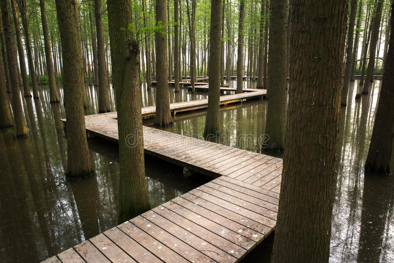 XINGHUA, CHINA: Lizhongshuishang forest or Li Zhong water forest is the natural ecological oxygen bar, is a good place for urban p royalty free stock photography