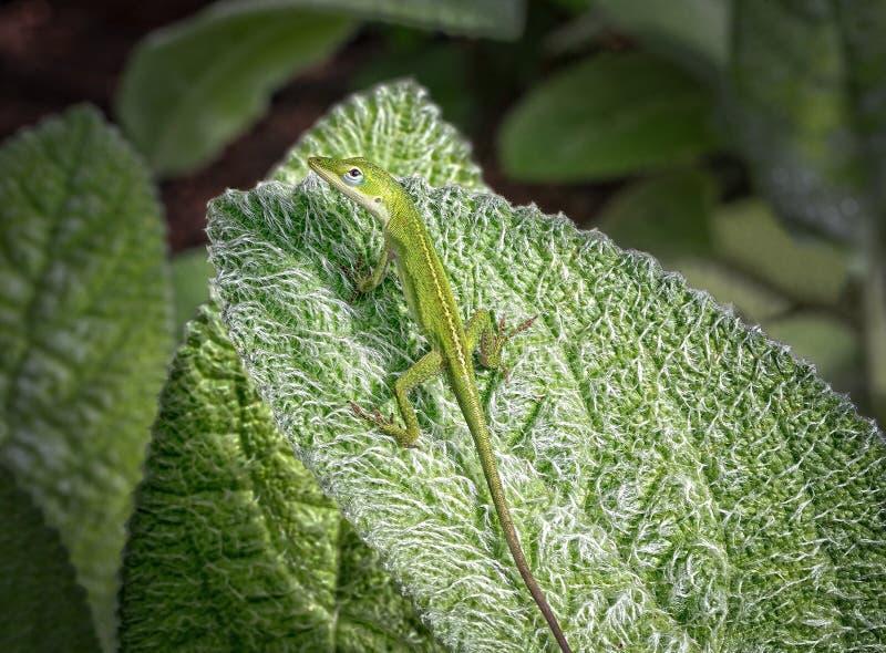 Lizzard verde fotografia stock