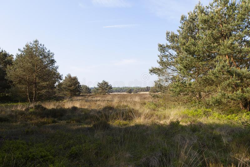 Ljungfält i tidig vår royaltyfria bilder