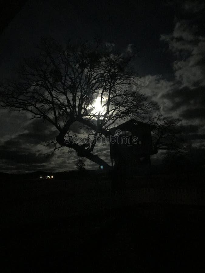 Ljus av fullmånetittarna till och med avlövat träd för barem i hösten som skapar en spöklik scence royaltyfria foton