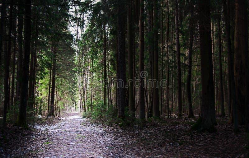 Ljus bana i en mörk skog arkivfoto