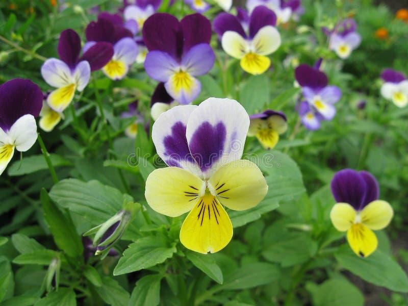 Ljus blommasommardag Kronbladnärbild Makroskönhet av naturen fotografering för bildbyråer