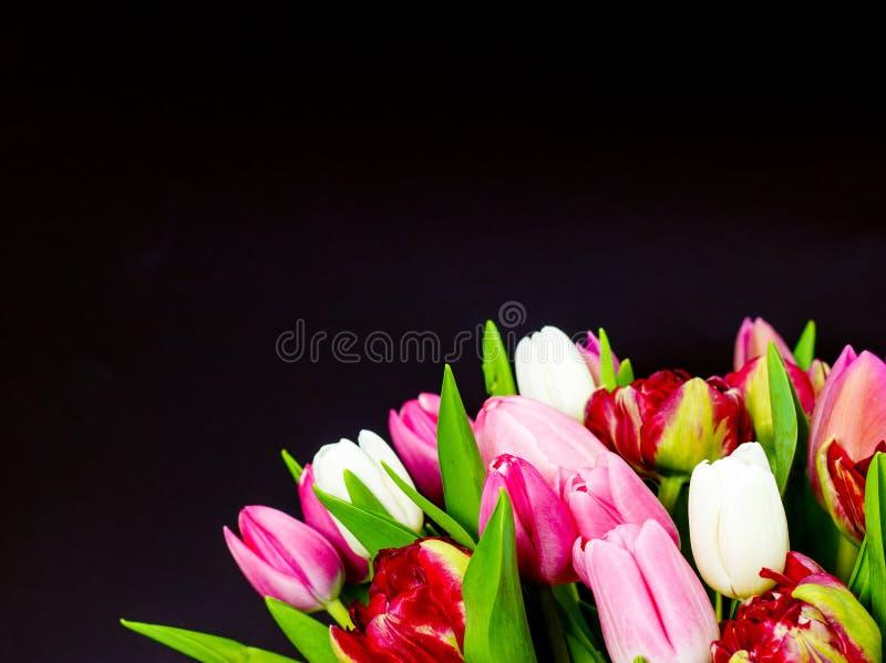 Ljus bukett av tulpan på en mörk bakgrund med blom- bakgrund royaltyfri foto