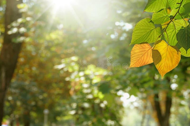 Ljus dag för höst fotografering för bildbyråer