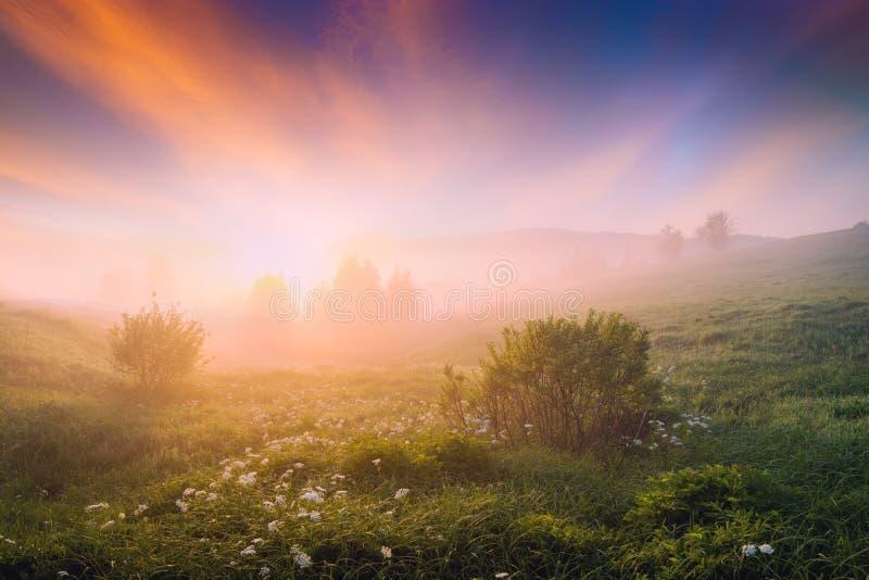 Ljus dimmig morgon med majestätiska rosa moln arkivfoto