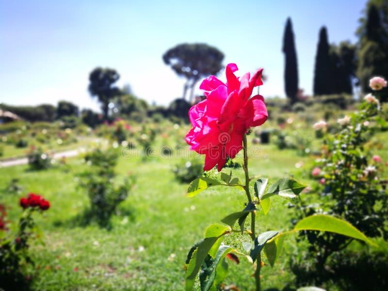 Ljus färgad blomma arkivbild