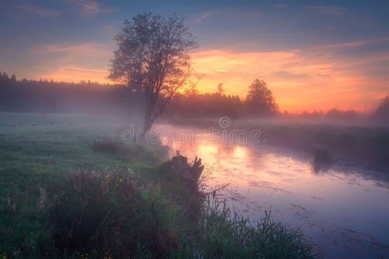 Ljus färgrik gryning på flodsida Sommarnatur på soluppgång Flodstrandnatur i livlig morgon Scenisk himmel över floden fotografering för bildbyråer