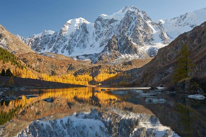 Ljus färgrik gul höstbergsjö, Ryssland, Sibirien, Altai berg, Chuya kant royaltyfri foto