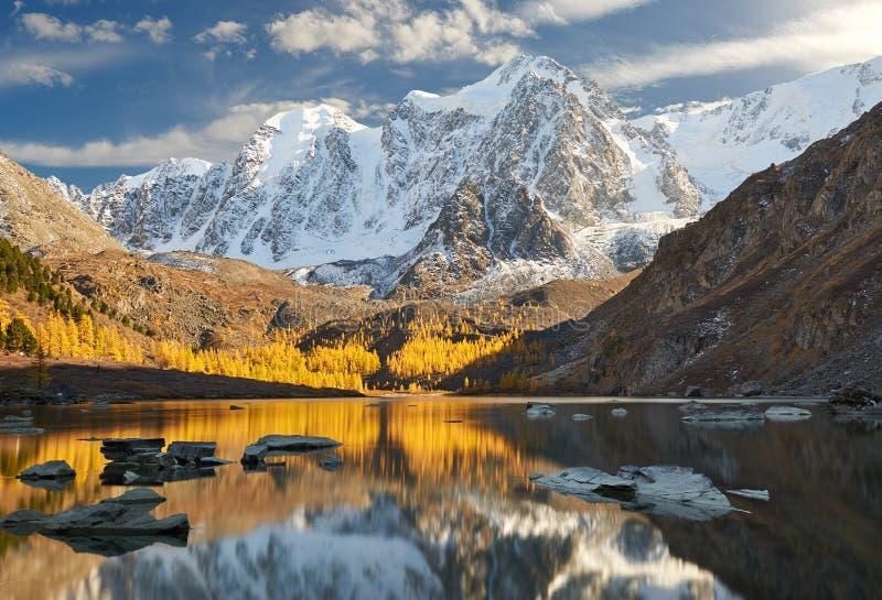 Ljus färgrik gul höstbergsjö, Ryssland, Sibirien, Altai berg, Chuya kant royaltyfria bilder