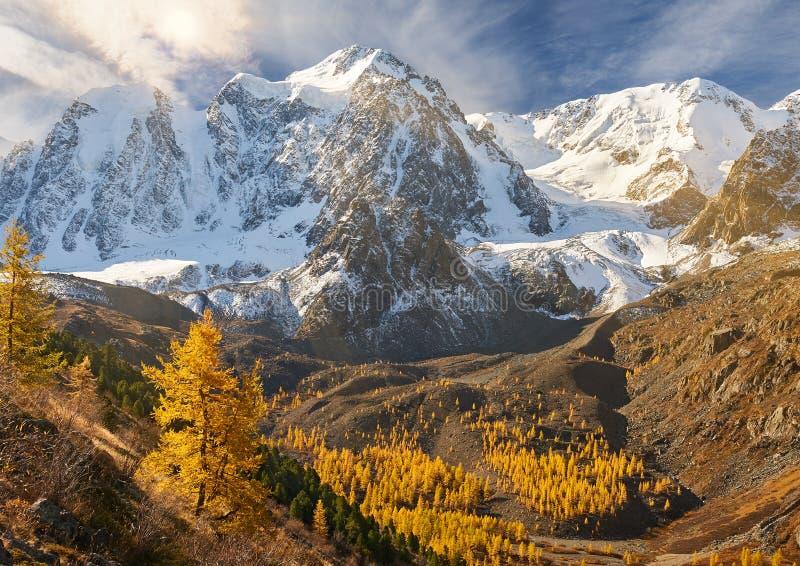 Ljus färgrik gul höstbergsjö, Ryssland, Sibirien, Altai berg, Chuya kant fotografering för bildbyråer