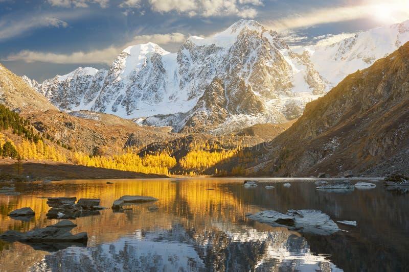 Ljus färgrik gul höstbergsjö, Ryssland, Sibirien, Altai berg, Chuya kant royaltyfri fotografi