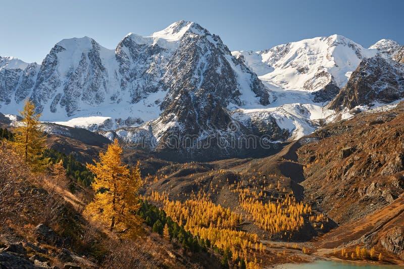 Ljus färgrik gul höstbergsjö, Ryssland, Sibirien, Altai berg, Chuya kant royaltyfria foton